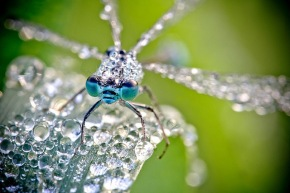 David Chambon- Insects Of The Macro World