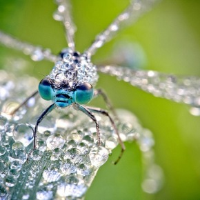 David Chambon- Insects Of The MacroWorld